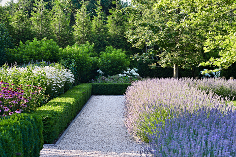 hollander lavender edging along gravel path