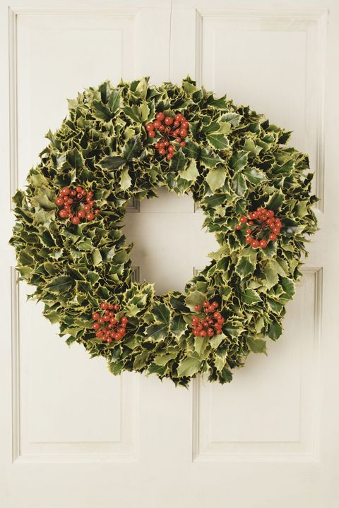 クリスマス 植物