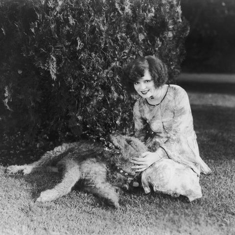 clara bow and airedale terrier
