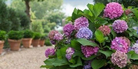 Consejos Para El Jardin Las Mejores 5 Plantas De Verano - Plantas-para-jardin