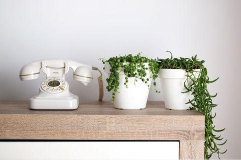 Las plantas que se comunican con sus dueños por WhatsApp