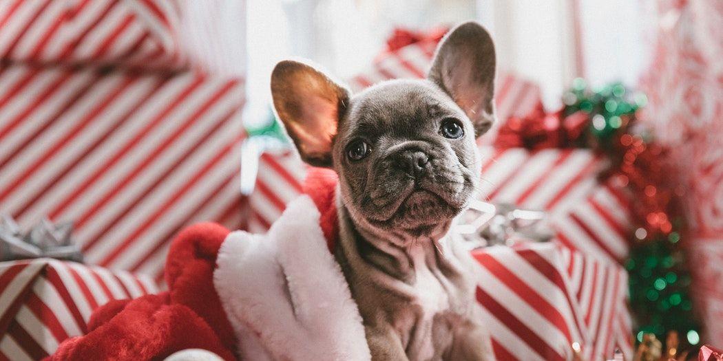 hunkemoller-matchende-onesies-jou-en-hond