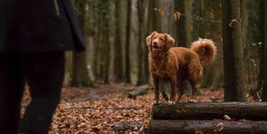 hondenbezitters gezonder