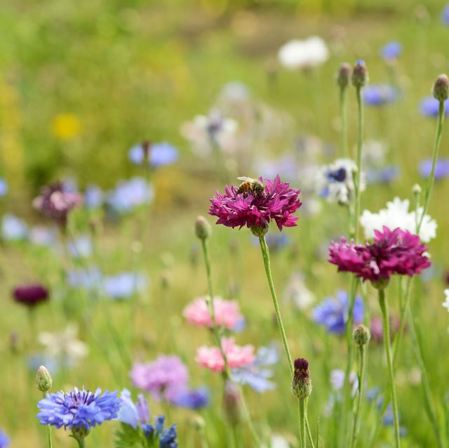 """plant these 11 wildflowers to create a """"bee motorway"""" in your garden"""