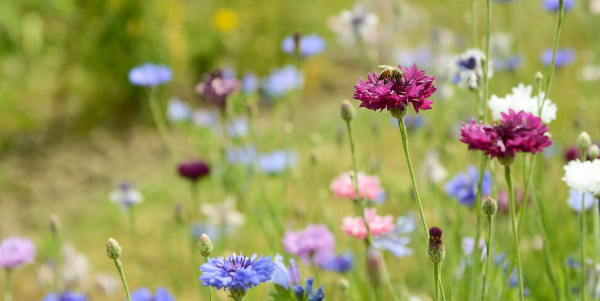 Plant these 11 wildflowers to create a bee motorway in your garden