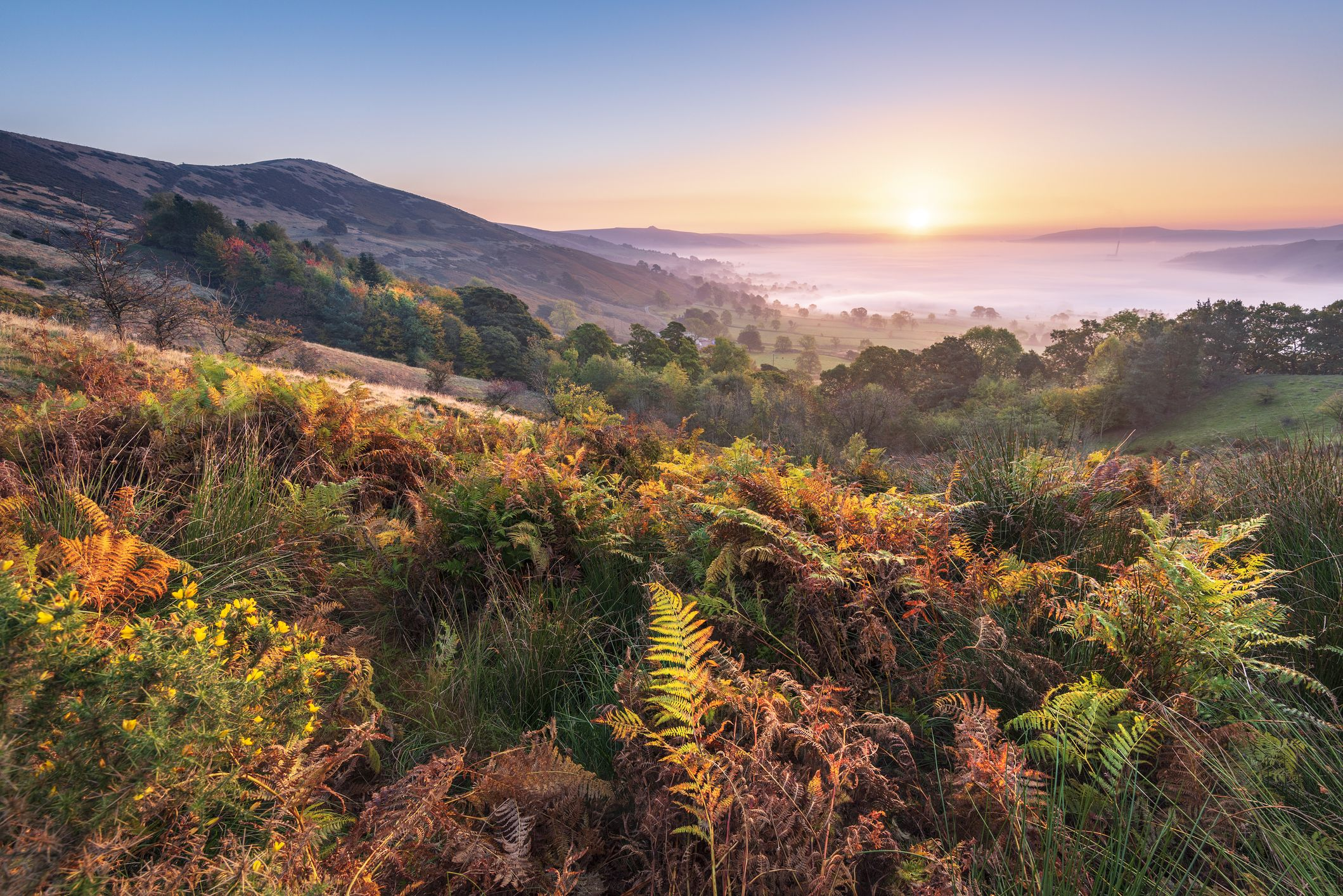 Britain set for a very colourful autumn, according to Forestry England