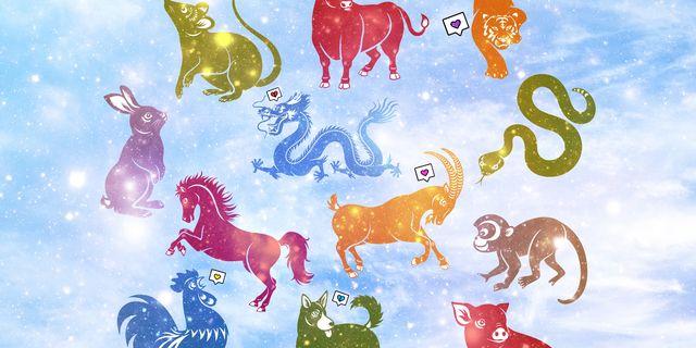 animales horóscopo chino