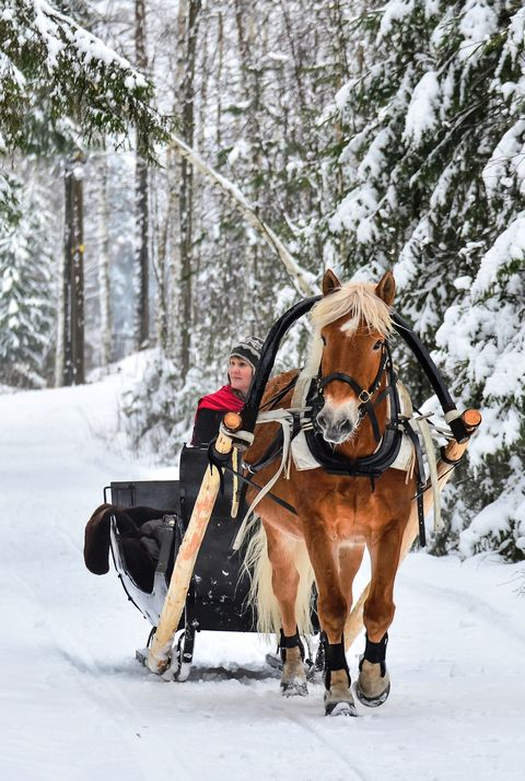 christmas facts -sleigh ride
