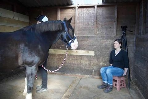 Horse, Mammal, Horse supplies, Mane, Stable, Mare, Horse tack, Horse grooming, Stallion, Farrier,
