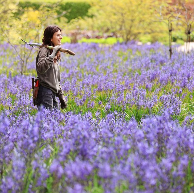 horticulturalist alessandra sana pictured amongst the camassias  at rhs garden wisley today   11 may 2021
