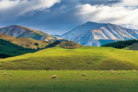 ニュージーランド・南島