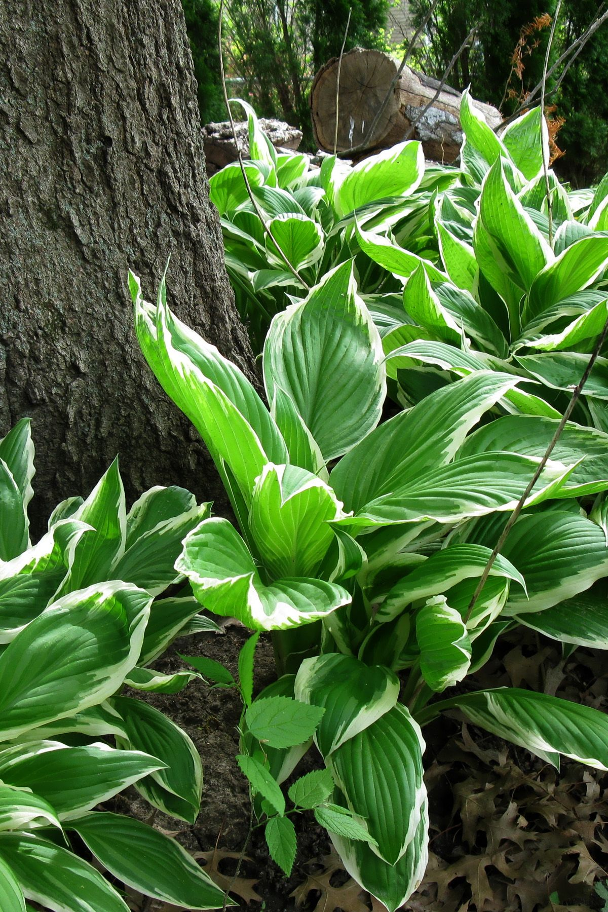 15 Best Shade Loving Plants Flowers That Grow And Thrive In Shade