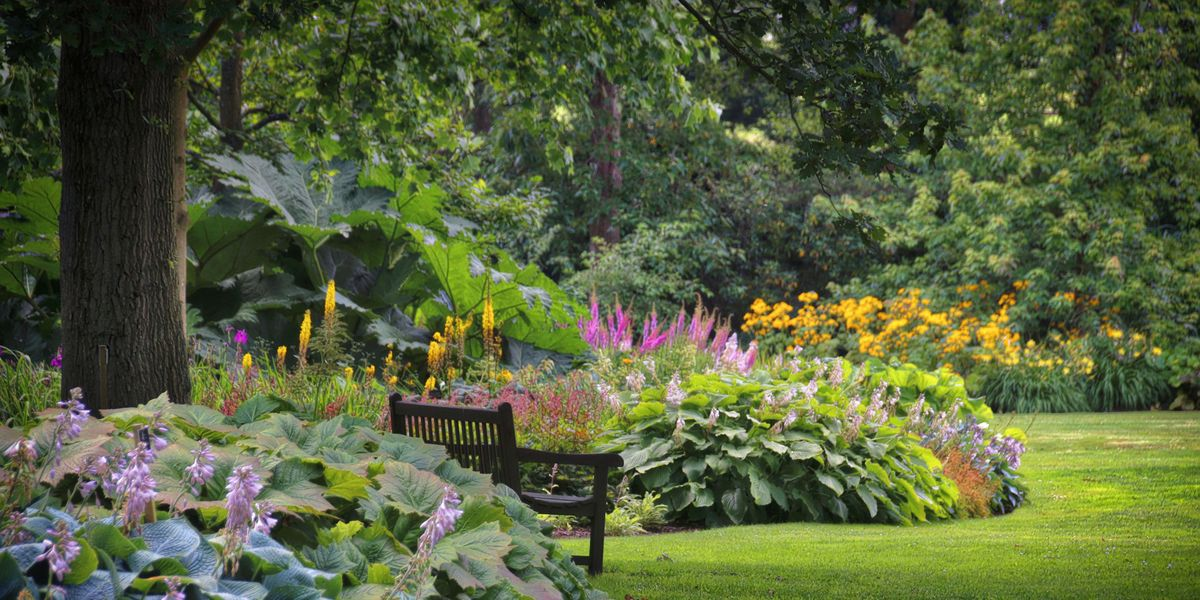 How to Care for Hostas So They'll Thrive in Your Yard
