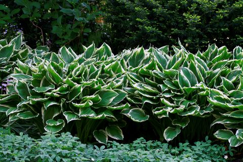 best plants for shade hostas veranda