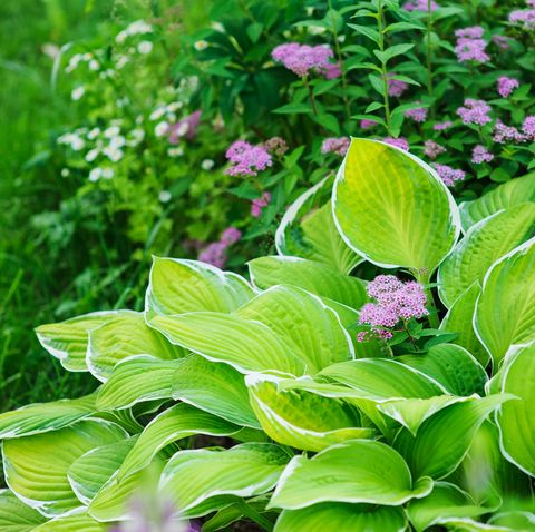 20 Best Perennial Flowers Easy Perennial Plants To Grow