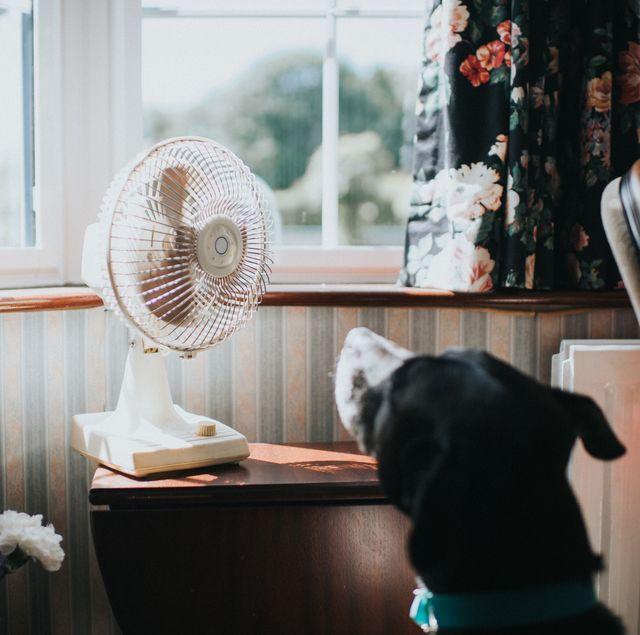 暑い季節に大活躍する扇風機。特に今年は家にいることも多く、部屋干ししている洗濯物の乾燥促進や、エアコンの空気を循環させるサーキュレーターなどとして、一年中使っていたという人もいるはず。今回は、自宅のインテリアに馴染む「スタイリッシュなデザインの扇風機」を厳選してお届けします!