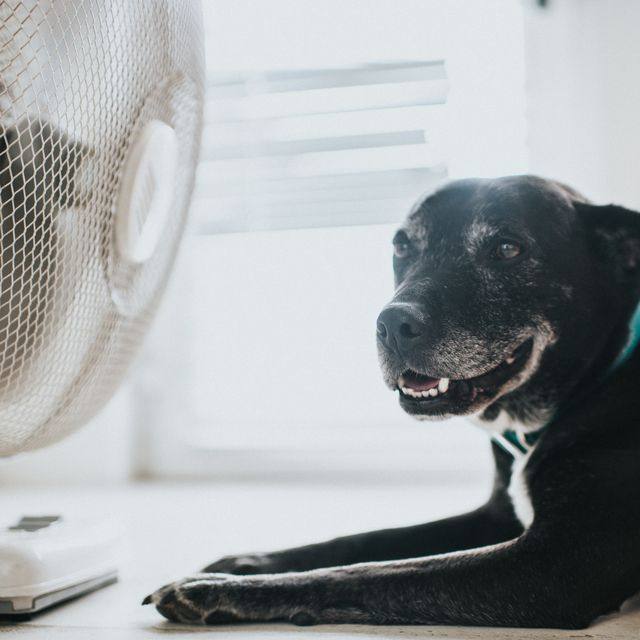5 hacks to cool down your home in a heatwave