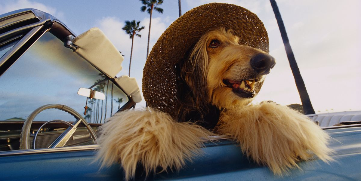 These 9 Dog Breeds Can Withstand Even the Hottest Temps