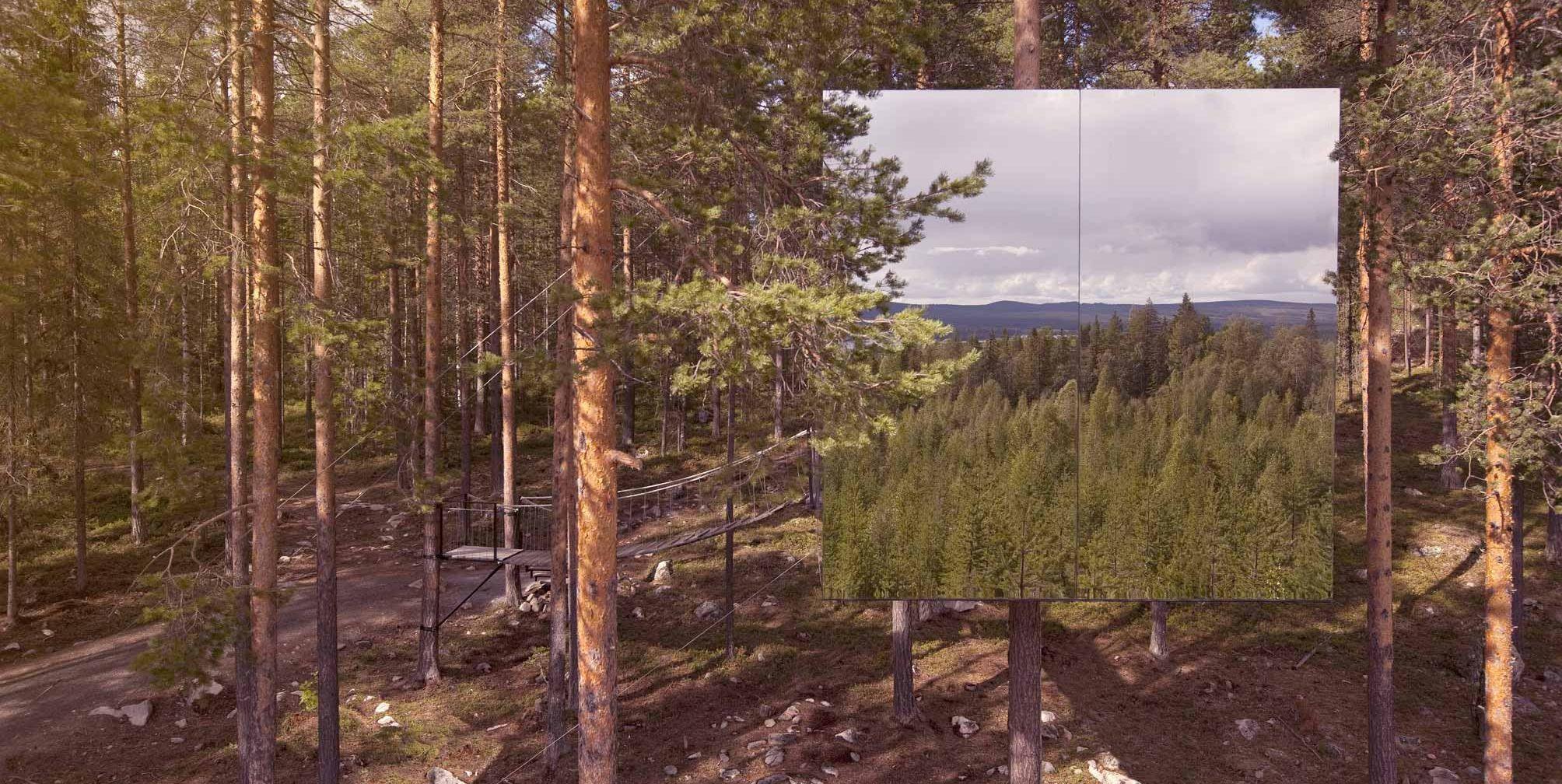 Hotel en un árbol de un bosque de Suecia
