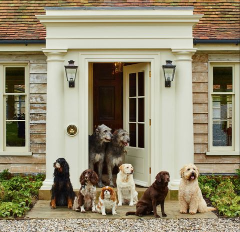 Dogs at Goodwood