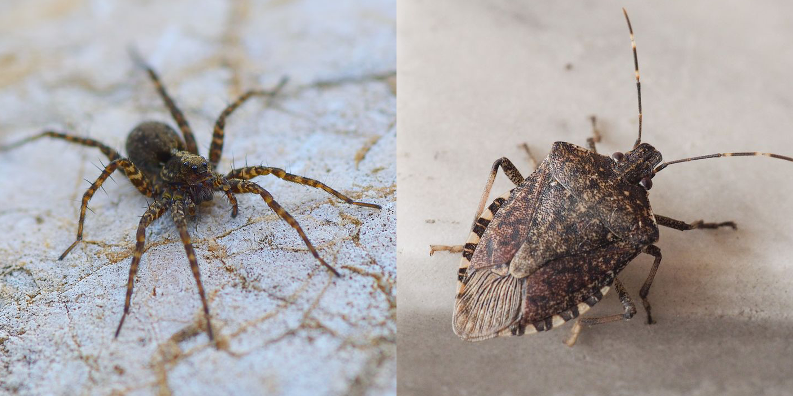 15 Common House Bugs To Know What Insects Live In Houses