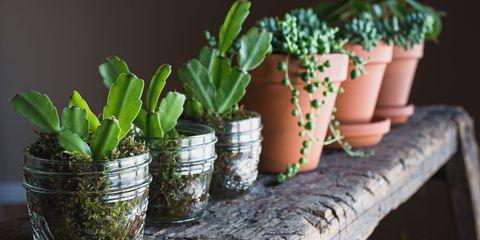 Flowerpot, Flower, Plant, Houseplant, Cactus, Room, Succulent plant, Herb, Garden,