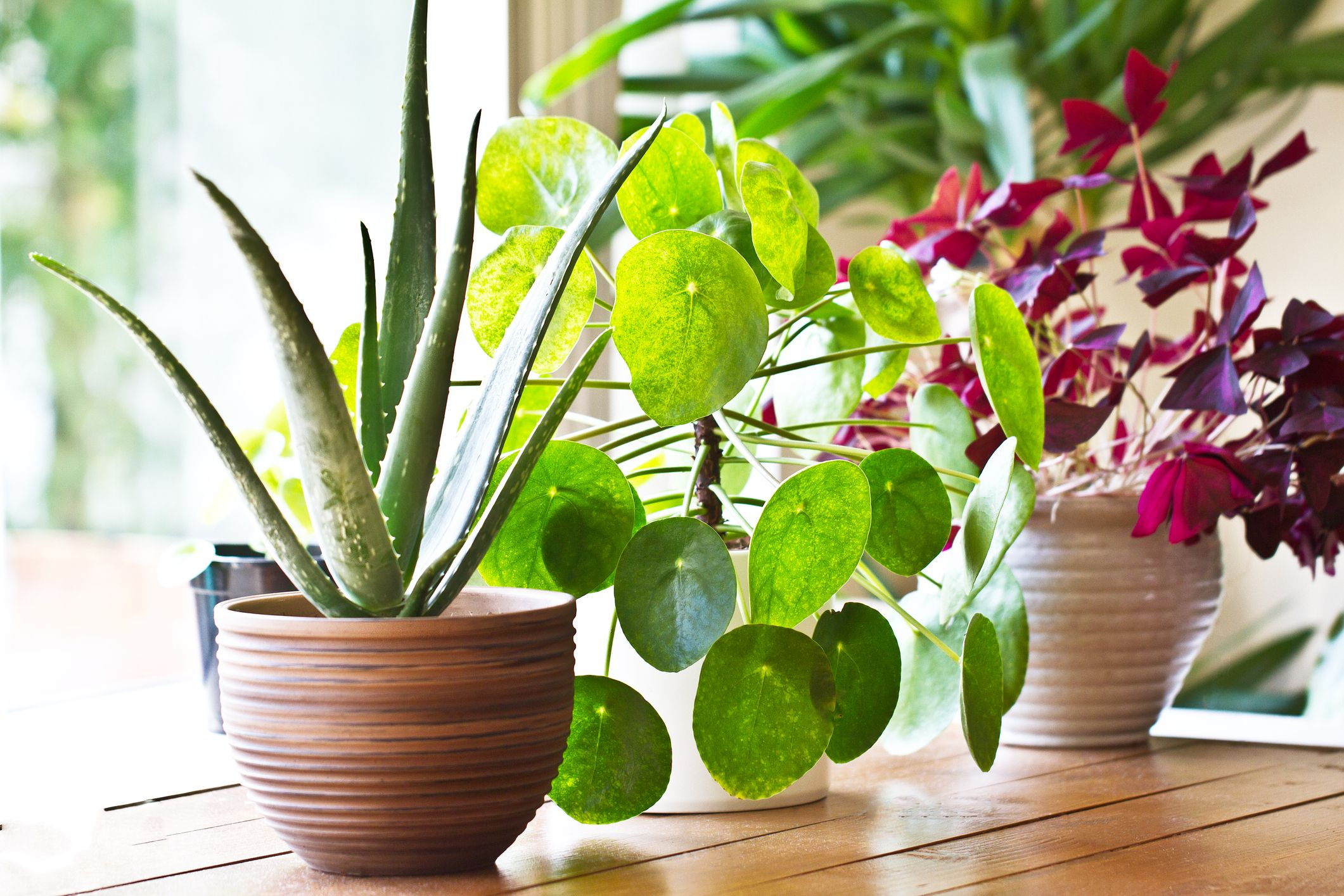 Do You Know About These Amazing Benefits Of Indoor Plants?