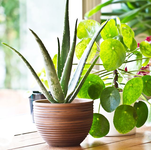 8 Benefits Of Indoor Plants How Houseplants Improve Your