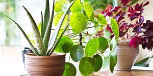 House plant display beside window. Indoor plants display
