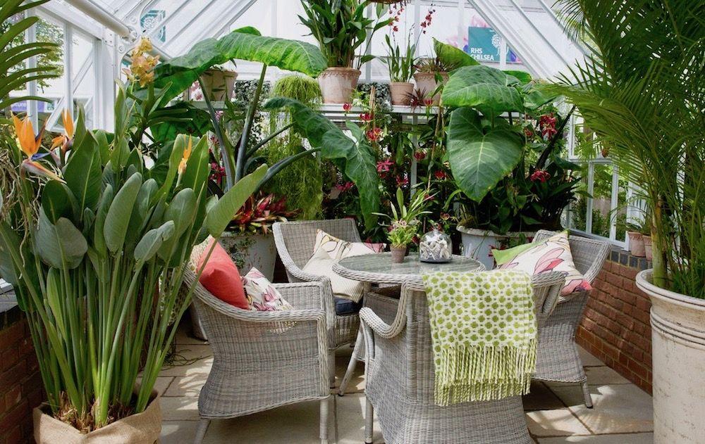 House plants photo