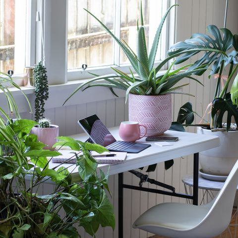desk table and chair interior with laptoo computer and potted plants