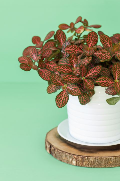 16 Strange Houseplants Weirdest Indoor Plants