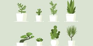 Best indoor plants and how to care for them