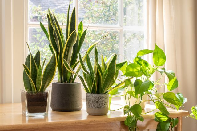 indoor houseplants next to a window in a beautifully designed home or flat interior