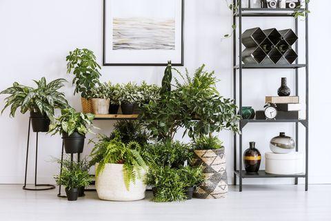 Houseplants and shelf