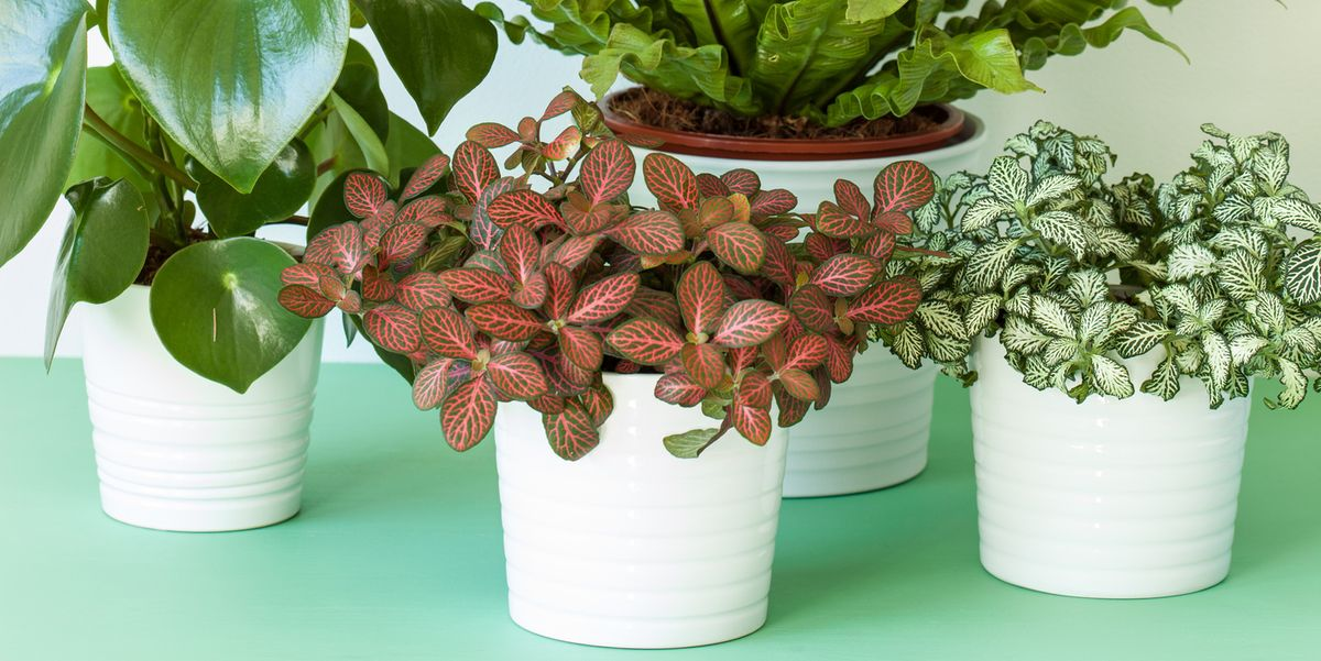 30 Indoor Plants You Can't Kill on colorful house plants, non-toxic house plants, small house plants, soothing house plants, robust house plants, weather proof house plants, hypoallergenic house plants, fragrant house plants, lightweight house plants, compact house plants, organic house plants, portable house plants, rugged house plants, elegant house plants, night blooming house plants, refreshing house plants, cool looking house plants, inexpensive house plants, strong house plants, easy to maintain house plants,