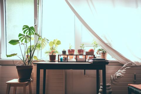 Best Indoor Plants House