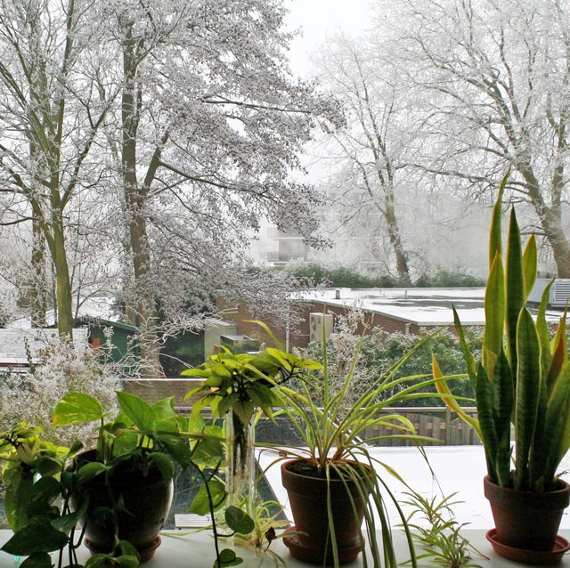 misty park in a residential area, completely frosted and white, seen from behind a window with highly contrasting green houseplants on the windowsill