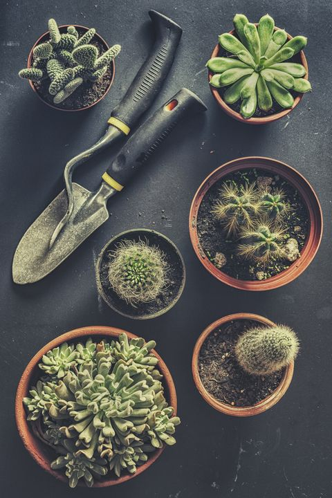 housewarming party ideas succulent planting