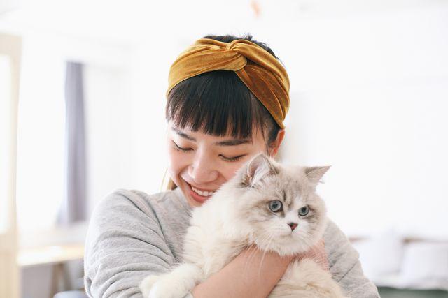 how to adopt a cat, cat adoption