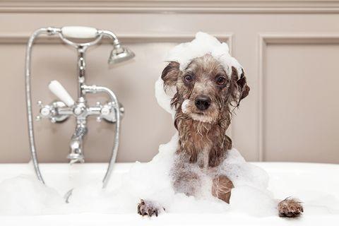 how to bathe dog