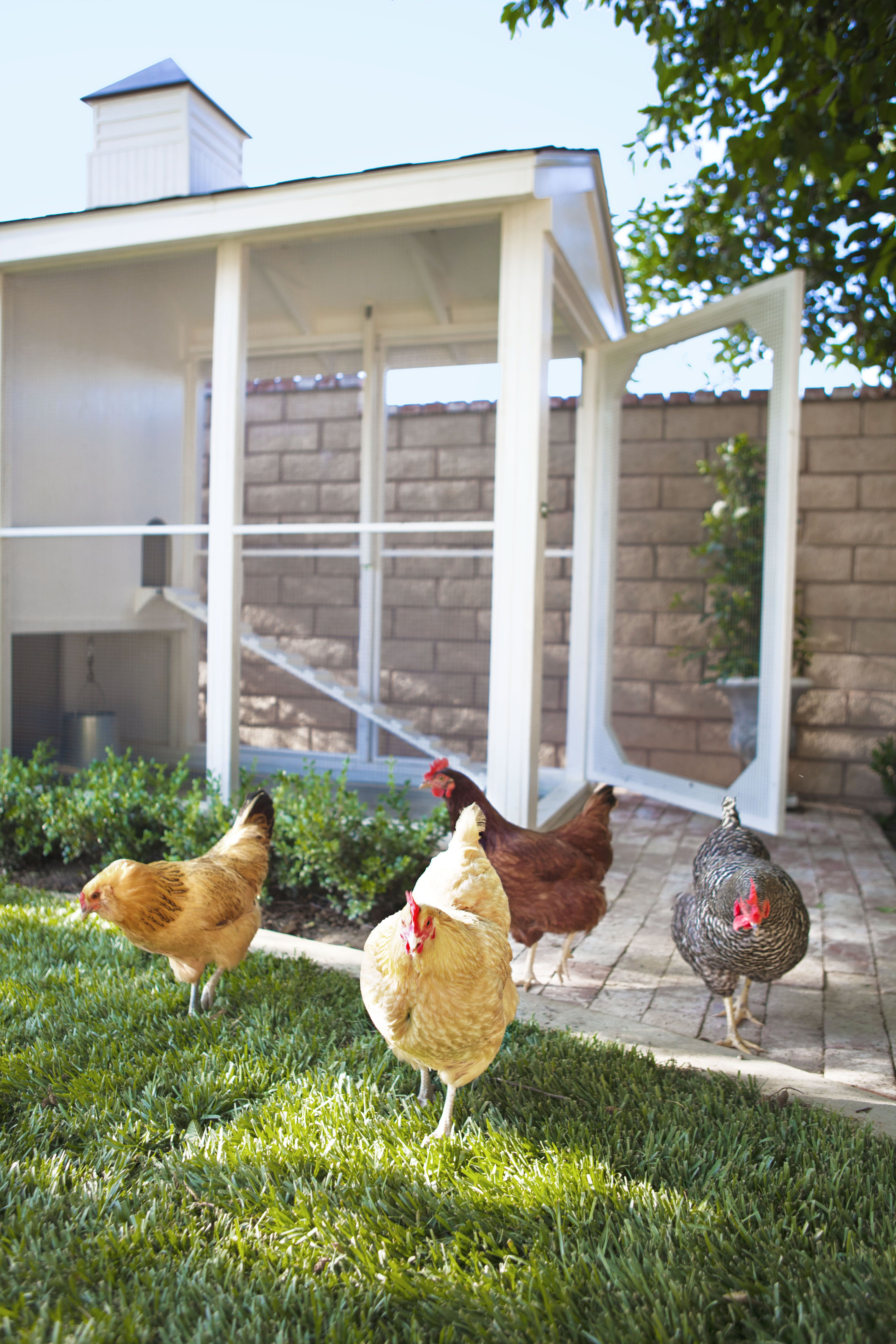 how to build a chicken coop and run