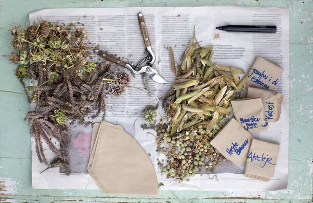 how to collect and store flower seeds