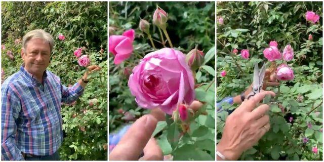 how to deadhead roses alan titchmarsh