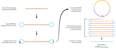 Pacbios proprietary genetic sequencing technology