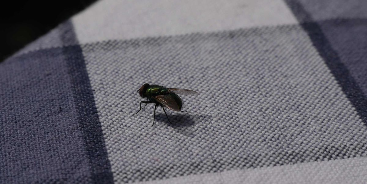 How to Get Rid of House Flies - Tips for Killing Flies