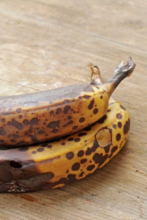 How To Get Rid Of Gnats Best Gnat Killer