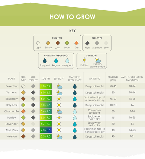 9 medicines you can grow at home in your own garden