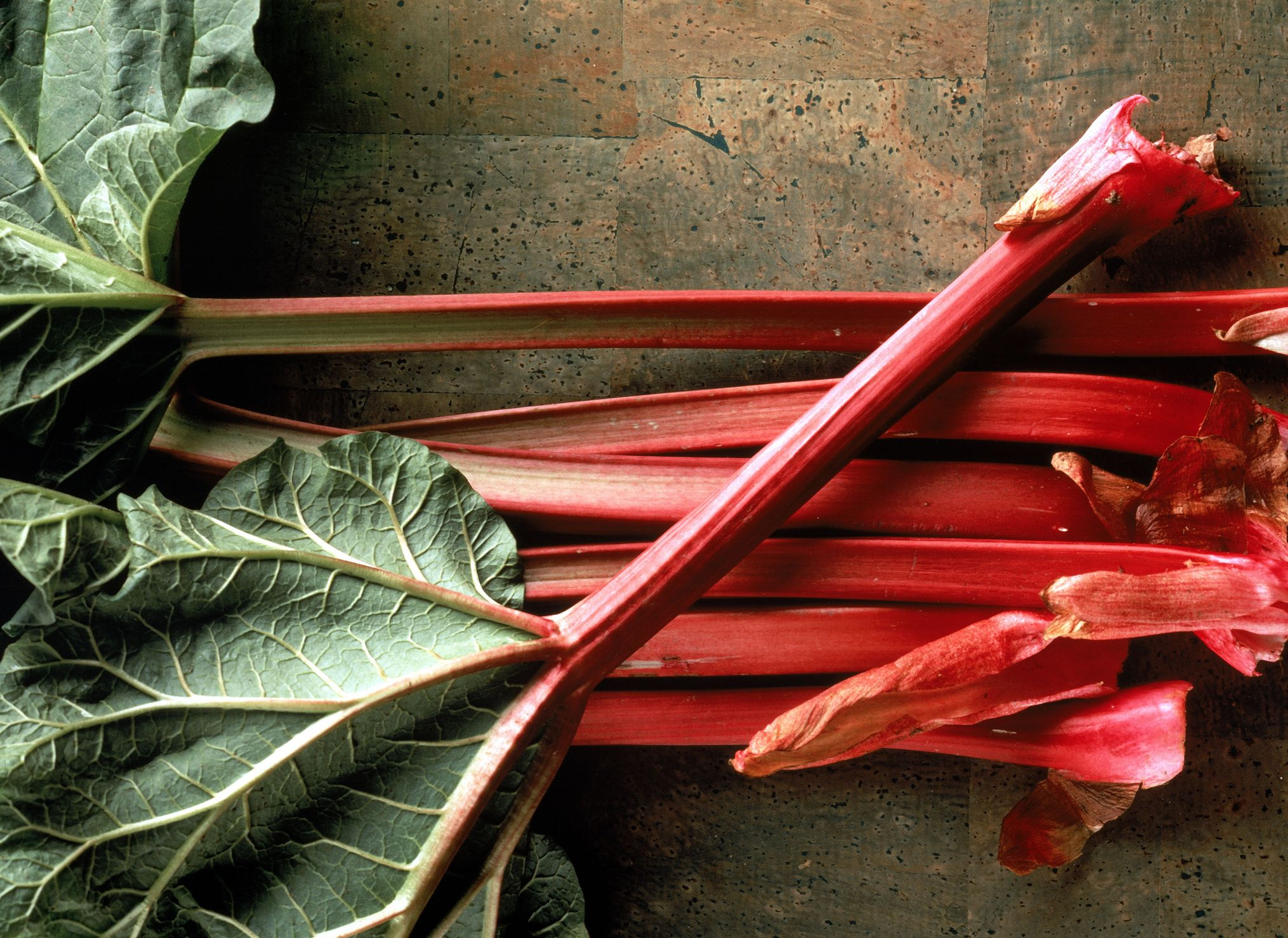 How To Grow The Most Pie Worthy Rhubarb Ever