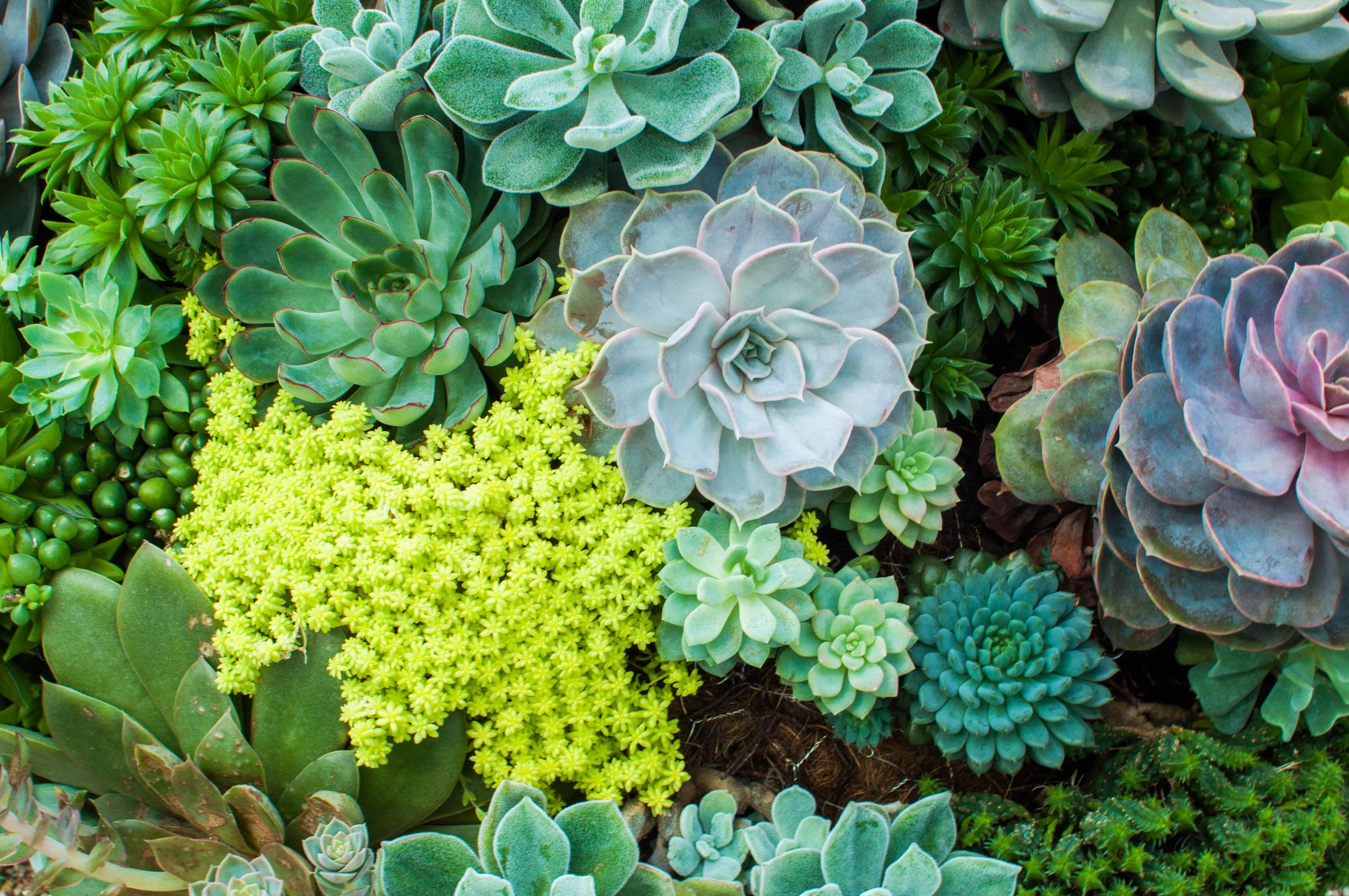 How To Care For Succulents Tips For Growing Succulents Indoors